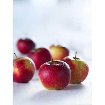 Æbler Presse Str.60/70