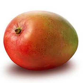 Mango Umoden (Hårde)