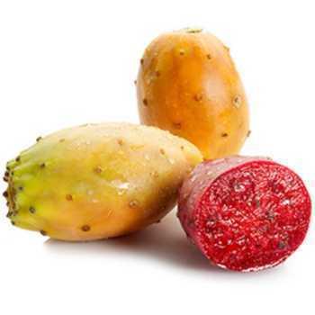 Figner Kaktus