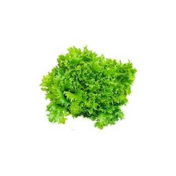 Frisse Salat