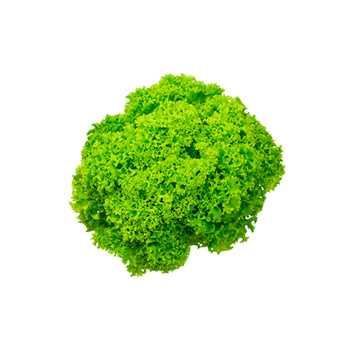 Bionda Salat