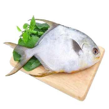 Moonfish 300-500g Selene Setapinnis