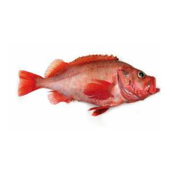 Rødfisk 700g+ Sebastes Marinus