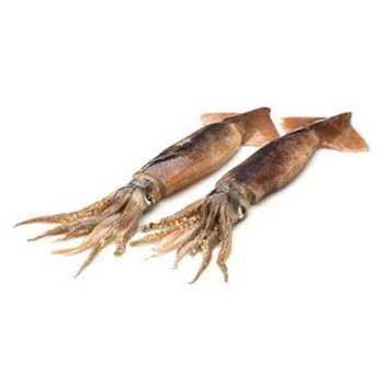 Blæksprutter Calamar Illex Argentinus