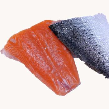 Laksehaler Salmon Salar Opdræt